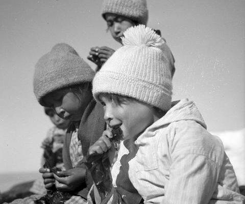 Polarskolen: Test din viden om Grønland og Færøerne (for børn)
