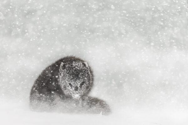 Udstilling: Arctic Biodiversity through the lens